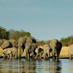 Africa- Elephants
