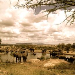 Africa- Animals