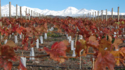 Argentina- Mendoza Vineyards and Mountains