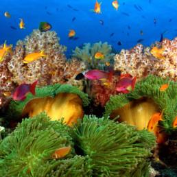 Fiji- dive