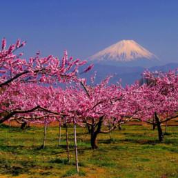Japan- Mt. Fuji