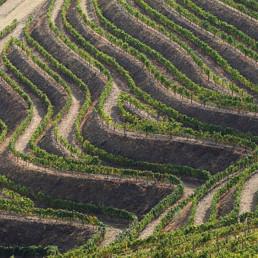 Portugal- Douro vinhateiro