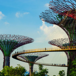 Singapore View of the Supertree with people walking on the OCBC Skyway